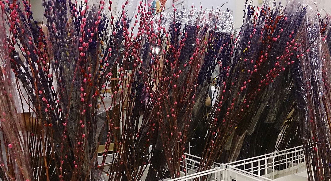 9 Lucky Plants and Flowers for Chinese New Year