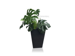 BFG-Monstera-Planter-Box