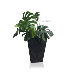 Monstera Plant + Planter Box